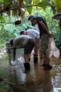 Tobago field work