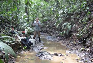 Fieldwork in a typical habitat for Brachyrhaphis episcopi , in the Panamanian rainforest  © G.Archard (2008)