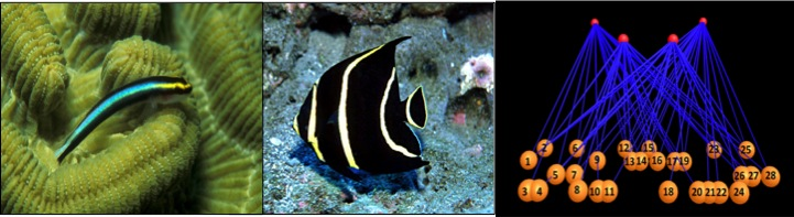 Cleanerfish